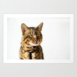Ben the Bengal Cat Art Print