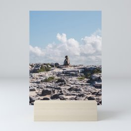 Lone sea lion looks out from rocky cliffside in the Galapagos Islands Mini Art Print