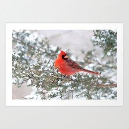 Winter's Beauty Cardinal Art Print
