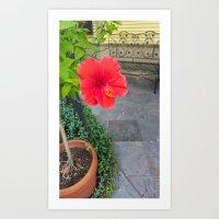 The Lone Hibiscus Art Print