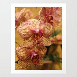 Orchids III Art Print