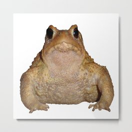 Bufo Bufo European Toad  Isolated Metal Print