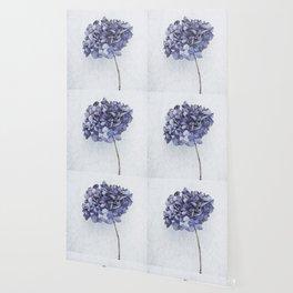 Dried Blue Hydrangea Wallpaper
