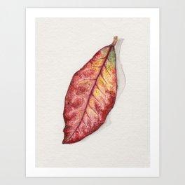Petra Croton Art Print