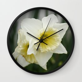 White and yellow daffodils, early spring flowers Wall Clock