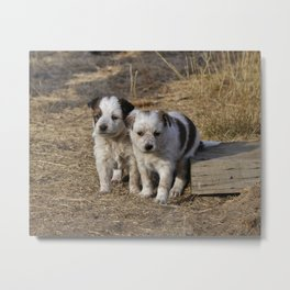 Heeler Puppy Love Metal Print