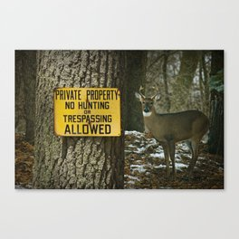 No Hunting Sign and Whitetail Buck Canvas Print