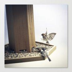 Tom Feiler Sparrows Canvas Print