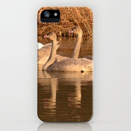 Trumpeter Swan Family iPhone Case