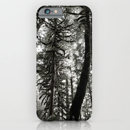 Oregon Woods Abstraction iPhone Case