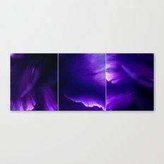 Dianthus Triptych Canvas Print