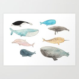 Group of whales Art Print