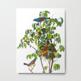 Blue Grosbeak Bird Metal Print