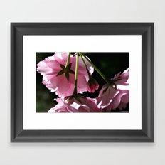 Pink Blooms Framed Art Print