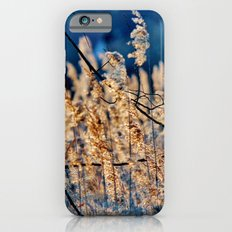 My blue reed dream - photography iPhone 6s Slim Case
