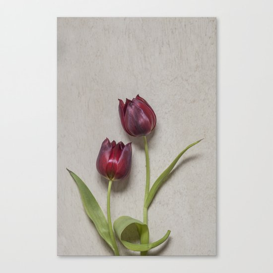 Two Red Tulips I Canvas Print