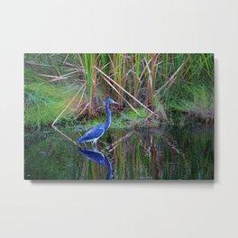 Little Blue Heron Metal Print