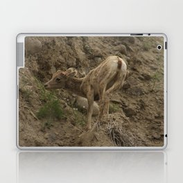 Baby Mountain Goat in Yellowstone National Park, WY Laptop & iPad Skin
