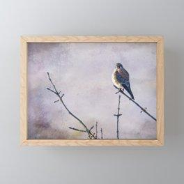 American Kestrel Framed Mini Art Print