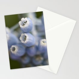 Muscari | Flower-art | spring Stationery Cards