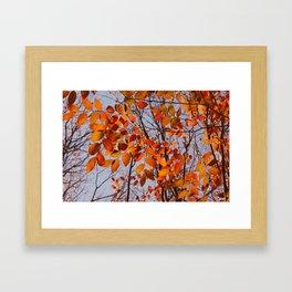 Autumn Desire Framed Art Print
