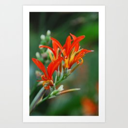 Red tropical flowers Art Print