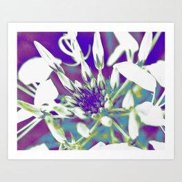 Pop Art Cleome Art Print