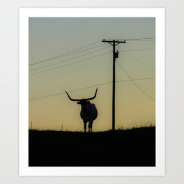 Longhorn at Sunset Art Print