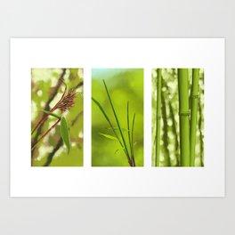Bambus Art Print