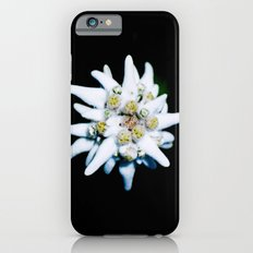 Single isolated Edelweiss flower bloom iPhone 6s Slim Case
