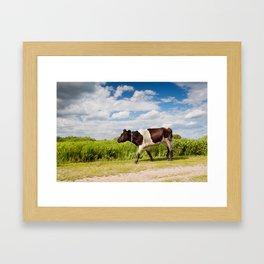 Calf walking in natural landscape Framed Art Print