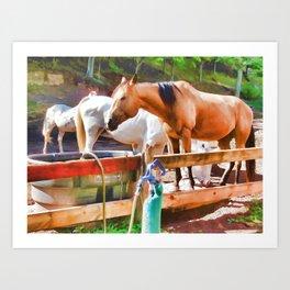 Horses In Pasture Eating At Feeder  Art Print