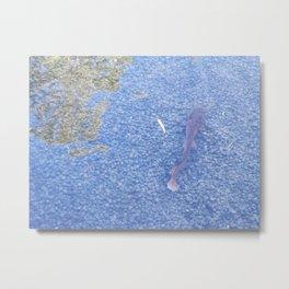Catfish in the Jordan Metal Print
