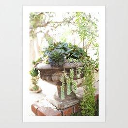 Overflowing Succulents Art Print