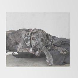 Great Dane waiting Throw Blanket