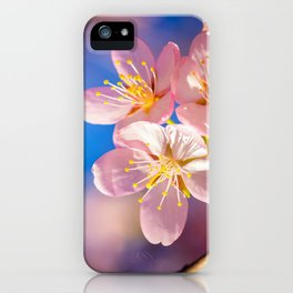 Three Pink Sakura Blossoms On A Clear Day Of Spring iPhone Case