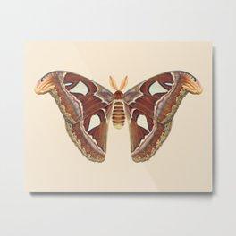 Atlas moth Metal Print