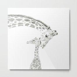Reticulated Giraffes, Camelopardis Reticulata Metal Print