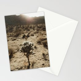 Cholla Cactus in Joshua Tree National Park Stationery Cards
