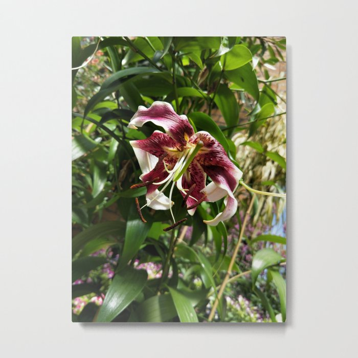 Withered lily Metal Print