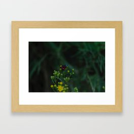 Flower photography by Gabriel Framed Art Print