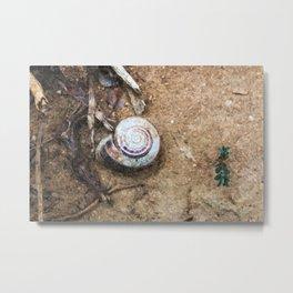 Stillife with snail Metal Print