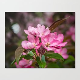 Flowering crab in May Canvas Print