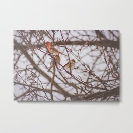 Birds of Winter Metal Print