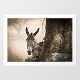 The curios donkey Art Print