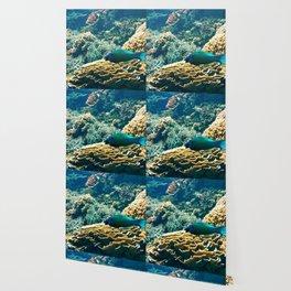 Coral Blue Wallpaper