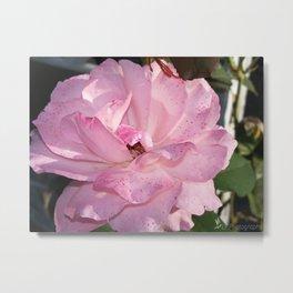 Freckled Flower Metal Print