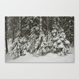 in the taiga forest Canvas Print