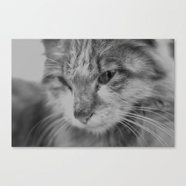 Black and White Turkish Winter Cat Canvas Print