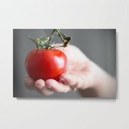 Women hand holding one red fresh tomato with stem Metal Print